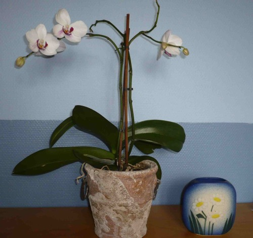 Orkide_bl