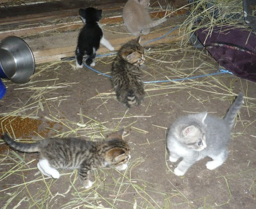Katter_alla