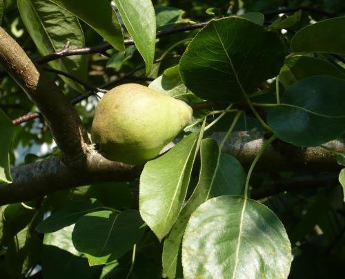 Frukt_pron_kart